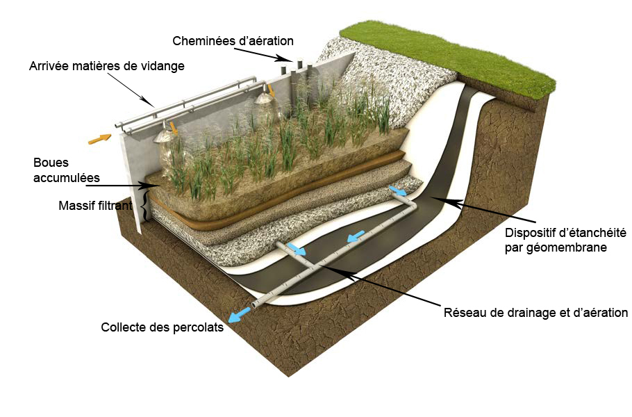 PhragmicompostageMV